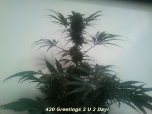 blueberry_greetingz