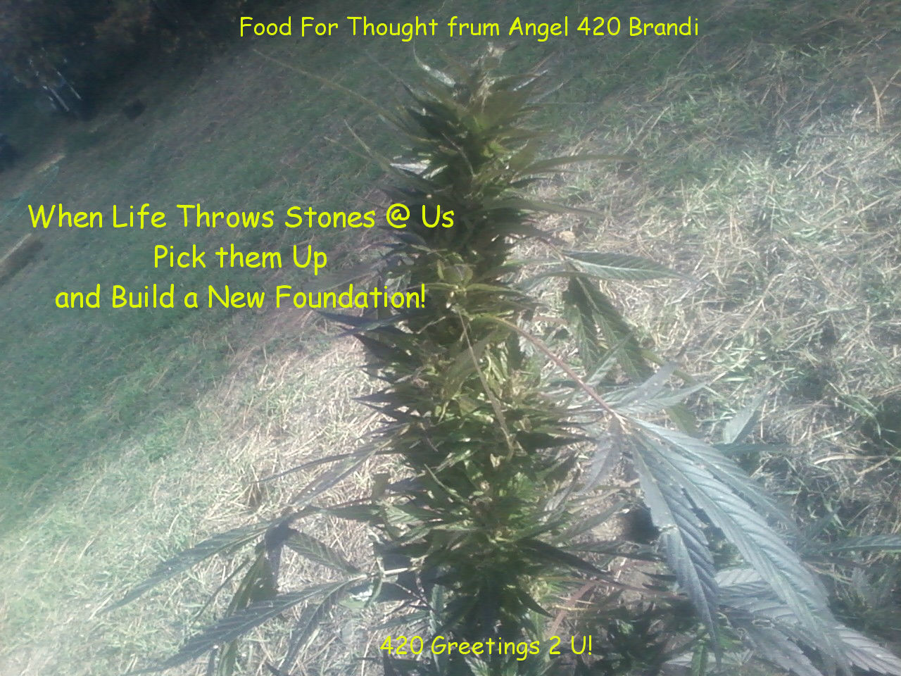 Angel 420 Quotes 420 Greetings